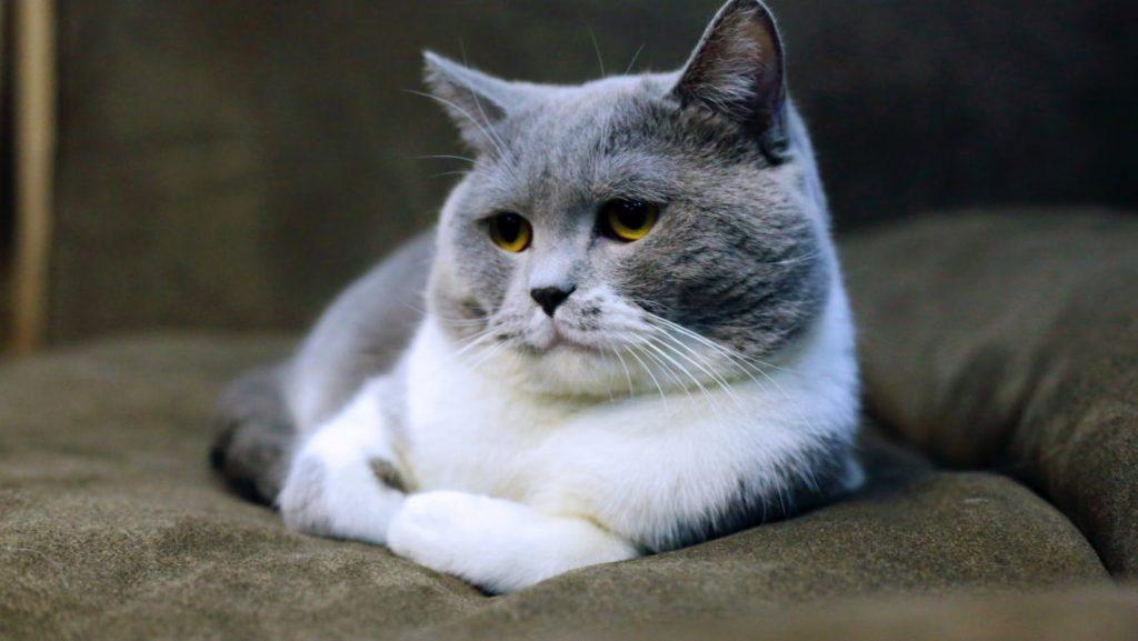 פינוי חתול מת מחיר