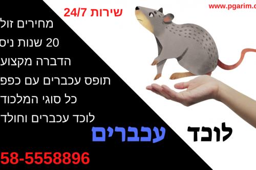 לוכד עכברים מחיר